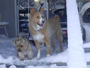 Fiesty & Girl in the snow of Christmas 2004
